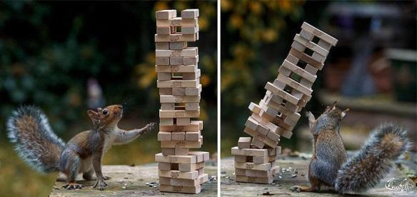 wildlife-photography-squirrels-max-ellis-19__880
